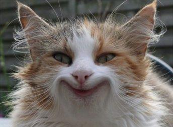 умные коты