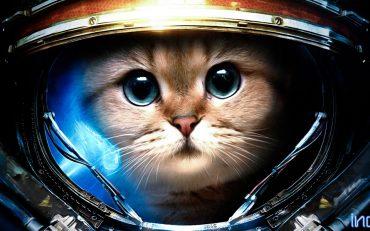 Коты-космонавты