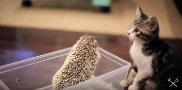 Котенок и еж