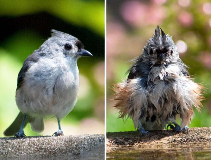 Животные до и после купания
