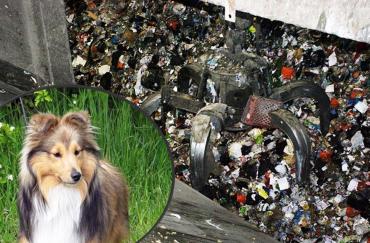 Шетландскую овчарку спасли из мусоросжигательной печи за минуту до смерти!