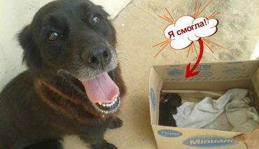 Собака рылась в мусорке не просто так... Она спасала малыша!