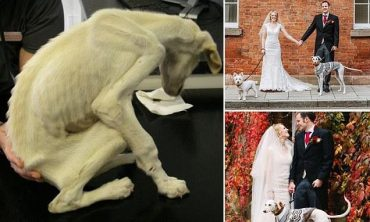 История голодавшего пса - посмотри, каким он стал в руках новой хозяйки!