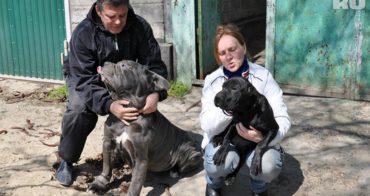Однажды пёс спас мужчине жизнь и началось... Теперь его дом всегда открыт для одиноких собак!