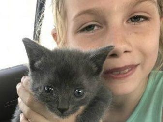 Котёнка бросили в контейнер для нищих, но храбрая девочка решила спрыгнуть туда и достать малыша!