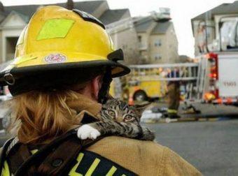 Трогательные фото спасателей и животных, которых они уберегли от смерти... До слёз!