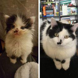 До и после: фото брошенных животных, которые нашли свой любящий дом... Аж душа радуется)