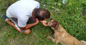 Нет таких ран, за которые он бы не взялся! Защитник животных из Бразилии спас безнадёжного щенка )