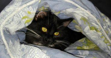 Женщина взяла в дом милого котёнка... Но он оказался не тем, кем казался на первый взгляд! :)