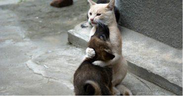 Кошка с человеческим сердцем! Видео героического спасения щенка из ямы