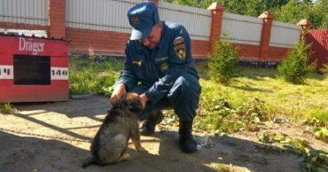МЧС-овцы приехали в пустой дом - покормить собаку, которую когда-то спасли... И вот к чему привела их инициатива!