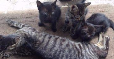 Вместо рыбы – котята! Отец и сын хотели порыбачить, но пришлось спасать кошачье семейство! :)