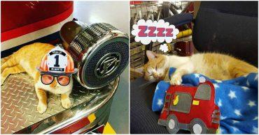 Его зовут... Пламя! Бродячий кот обрел тёплое местечко в пожарной части)