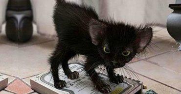 """""""Включайся, железяка!"""" Коты-хакеры, которые """"спалились"""" при взломе хозяйского гаджета... :)"""