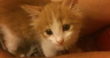 Они притащили в дом кота, несмотря на запреты отца... А тот вдруг оказался РАД!