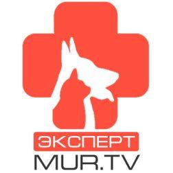 Ветеринар MUR.TV