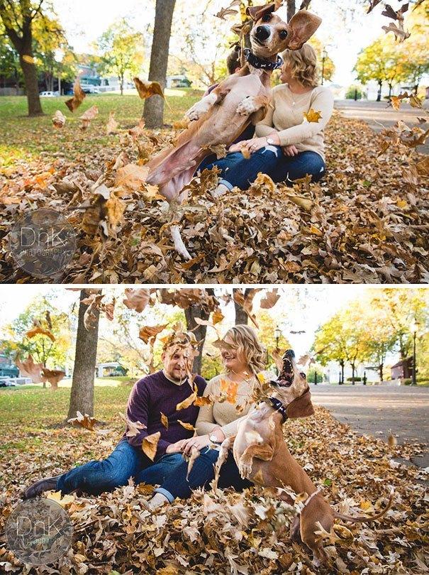 funny-dog-photobombs-93-58f081cadb265__605