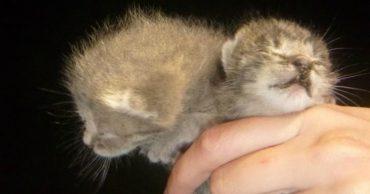 Они молили о помощи больше недели! Волонтеры спасли еле живых 3-дневных котят...