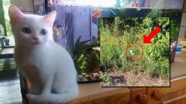 Один в поле… Женщина случайно заметила котёнка возле трассы - и это полностью изменило его судьбу!