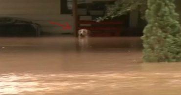 """""""Вода поднималась всё выше, и вот уже сверху остался один нос..."""" Спасение пса, оставленного на привязи!"""