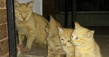 Шёл, увидел голодные кошачьи глаза и просто дал еды... А кот рассказал своим - и теперь его встречает целая армия!)