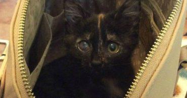 У Киры всю жизнь была аллергия на кошек, пока она не подобрала котенка, облитого хлоркой!