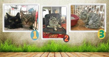 Двери - настежь! 46 животных, которые остались без хозяев, нашли приют в маленьком доме...