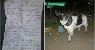 Вам письмо! К пустой скамейке в ночном сквере была привязана собака и записка...
