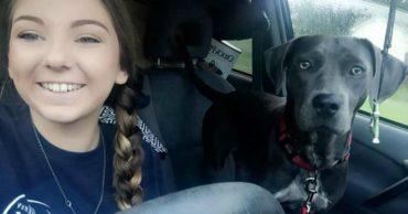Надвигалась беда... Спасая любимую собаку, девушка отправила необычное письмо своему преподавателю!
