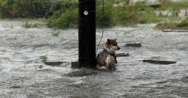 Хозяева спаслись, а он остался на привязи!!! Пёс мог погибнуть, если бы не маленькая случайность...