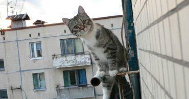 Она мечтала летать, но сорвалась с балкона... На кошке не было живого места, но сумму на лечение удалось собрать всего за 2 часа!