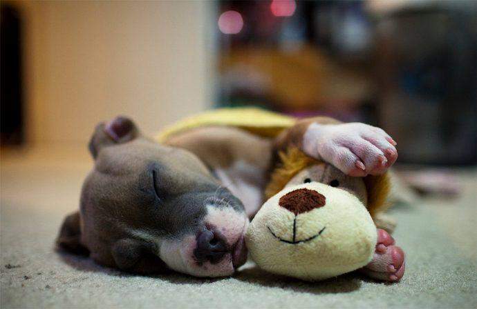 The-sleeping-dog
