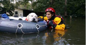 В ожидании урагана Ирма... Люди объединяются, чтобы спасать животных!