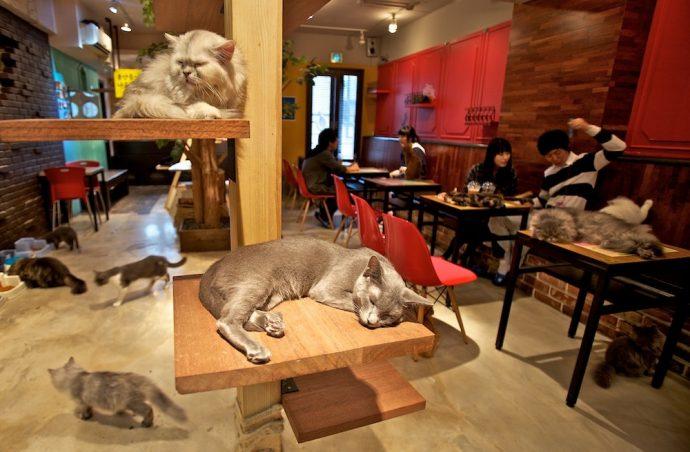 korea-japan-cat-cafe