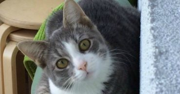 Над головой котенка мчались машины... Его спасло чудо и рисковые девушки!