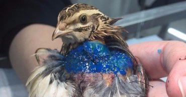 Ювелирная работа! Ростовские ветеринары успешно прооперировали крохотную птичку, и вскоре у неё появилась заботливая хозяйка!