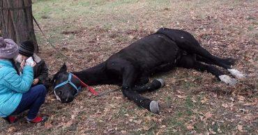 """""""Без комментариев!"""" Хозяин не смог объяснить, зачем он бросил коня, привязав его в лесу без еды и воды..."""