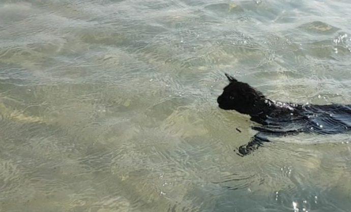 5-beach-cat-768x464