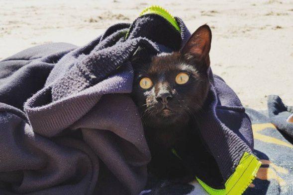 7-beach-cat-e1507126793615