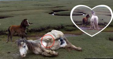 Ее крастота стала для нее ловушкой! Двое мужчин спасли несчастную дикую лошадь, запутавшуюся в собственной гриве!