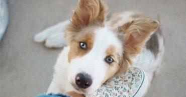 cute-dog-hero