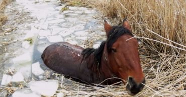 По шею в ледяной трясине и без надежды на спасение… В Омской области похищенного коня бросили умирать в болоте!
