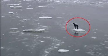 """""""Смотри, мамонтенок! А, нет..."""" Моряки обнаружили собаку в открытом море, и один из них немедленно прыгнул в воду!"""