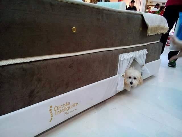 mattress-dog-bed-1754