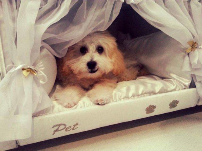 mattress-dog-bed-4298