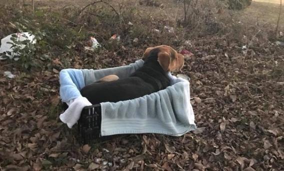 rescue-rock-pup-1