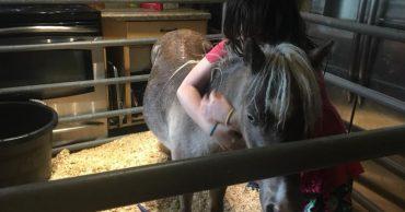 6500 фунтов лошадей в маленькой комнатке - настоящее безумие! Но только не тогда, когда речь идет о спасении животных...