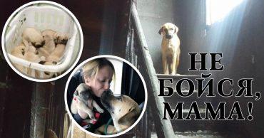 Бродячая собака по имени Мама долго не давалась в руки спасателям. Посмотрите, какую тайну скрывала от людей эта бедняжка! )