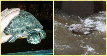 2 ЧП в один день: Чайка и Черепаха! Внимательность людей помогла спасти жизни необычных животных!