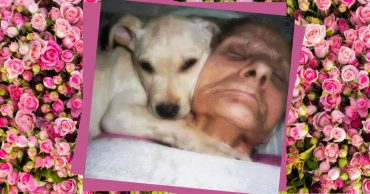 Хозяйка лежала в коме, а собака не отходила от нее ни на минуту... Когда женщина очнулась, её первые слова потрясли всех!
